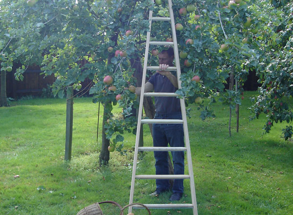 Wooden orchard ladders